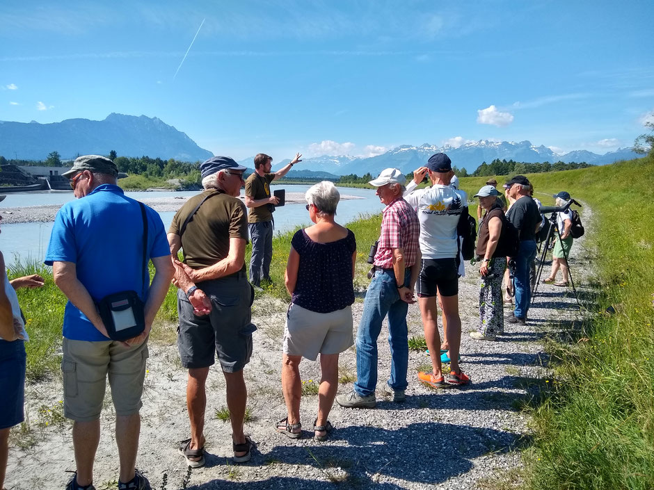 Alpenrhein, Flussregenpfeifer, BirdLife Schweiz, Stefan Greif