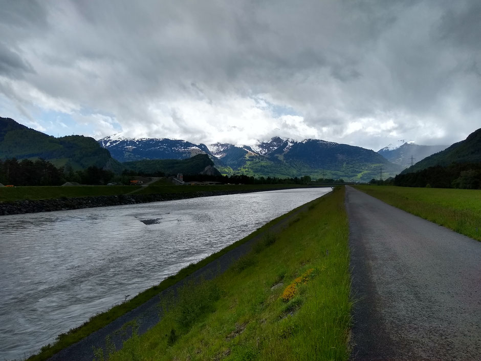 Nur wenig Kiesflächen für die Bruten der Flussregenpfeifer am Alpenrhein