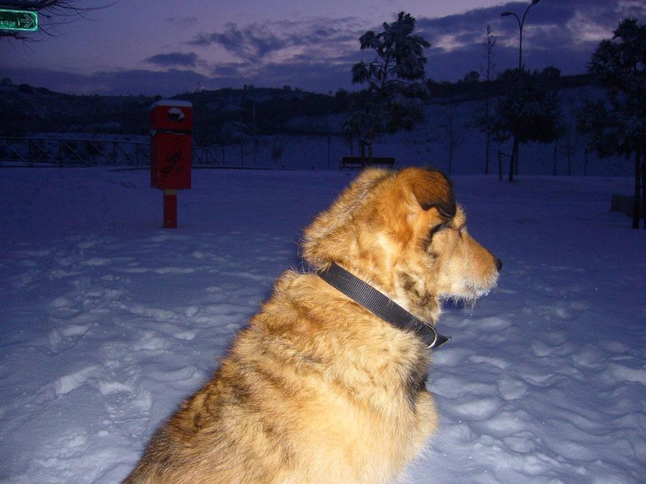 My dog Maggie