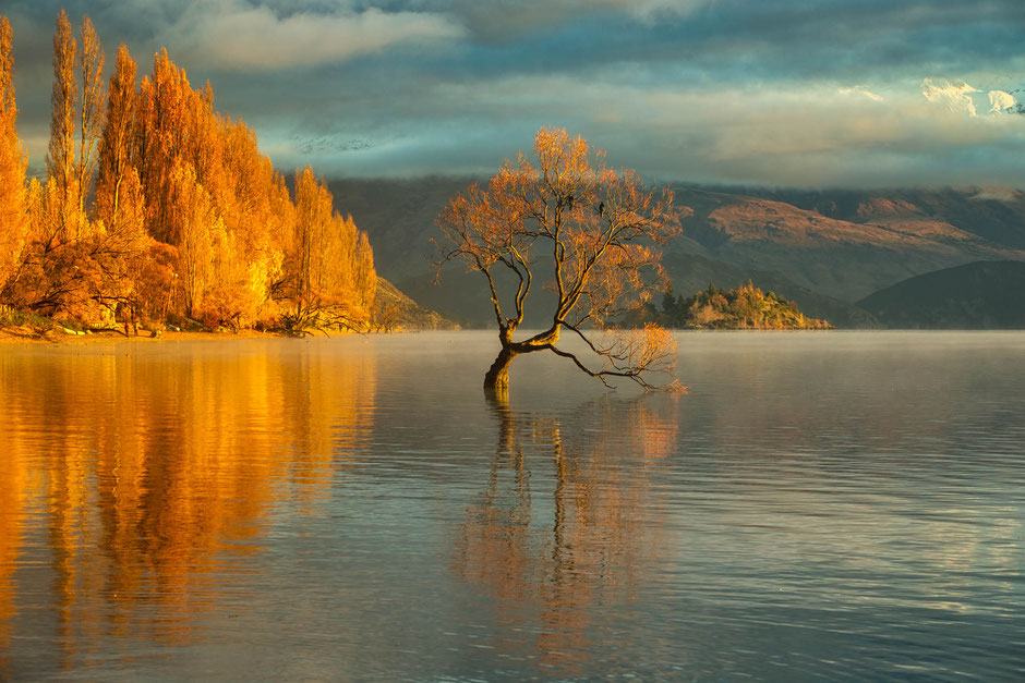 That Wanaka Tree in New Zealand