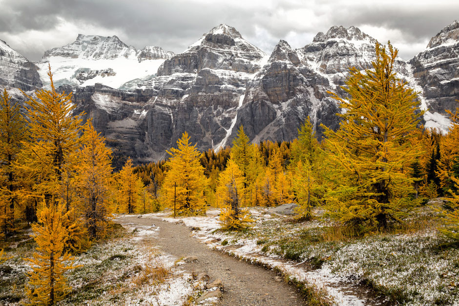 The Larch Tree Valley in Lake Louise in the autumn glory. 10 fantastic day hikes in the Rockies