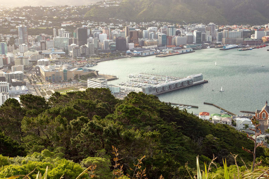 Wellington from the Mount Victoria lookout