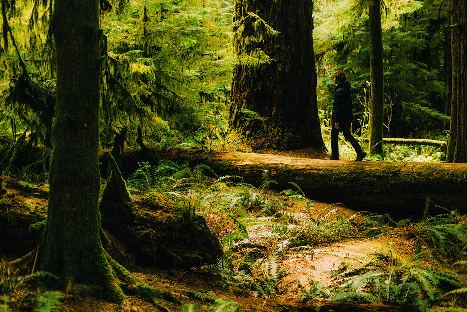 Cathedral Cover Forest on Vancouver Island. Guide to Vancouver Island