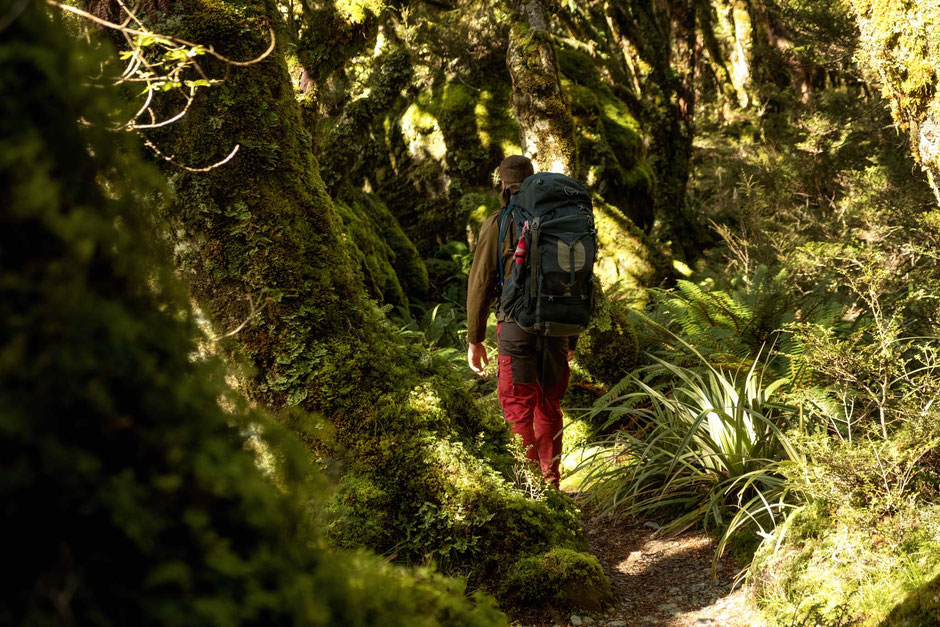 A hiker admiring the native beech forest on the Routeburn Trail in New Zealand