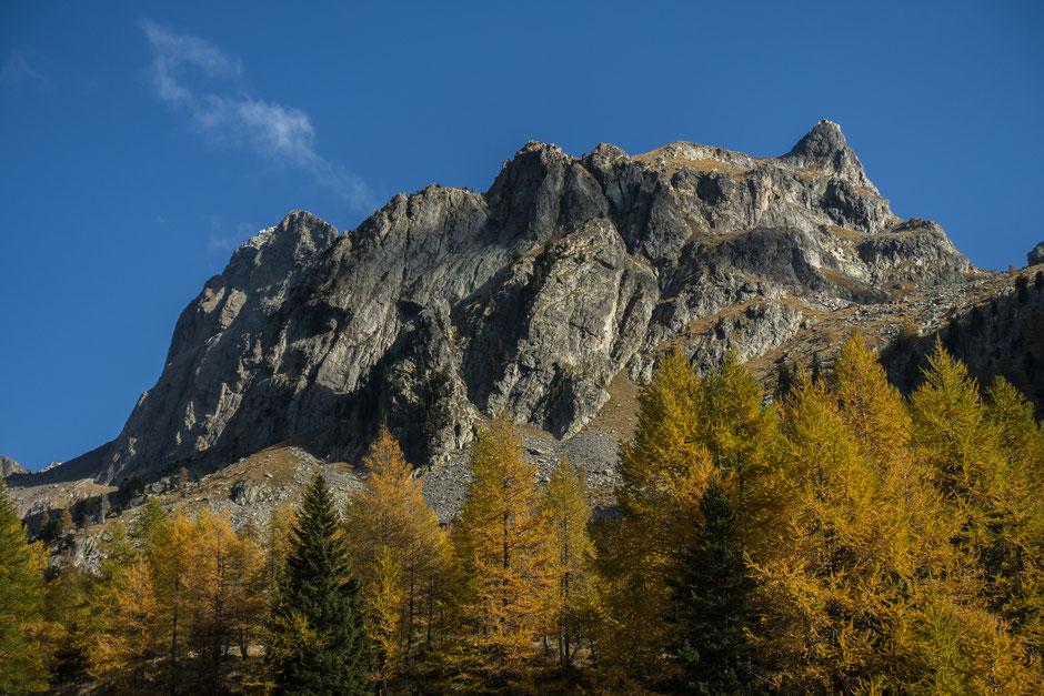 foret automne montagne