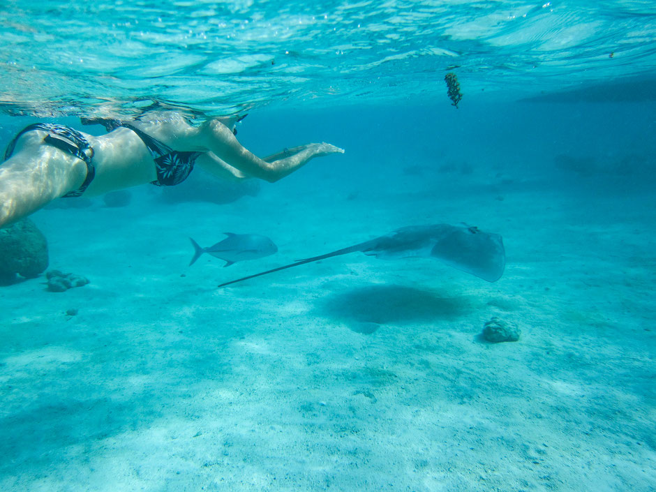 blog voyage polynesie