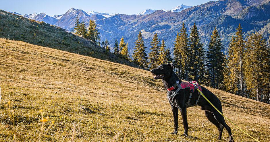 Urlaub mit Hund Salzburg Hochkönig