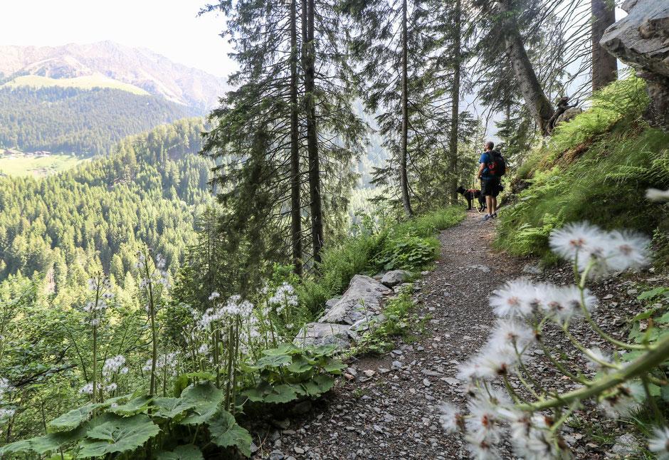 Wandern in Südtirol Bergurlaub mit Hund Wandern mit Hund Taser Schenna Höhenwege in Südtirol