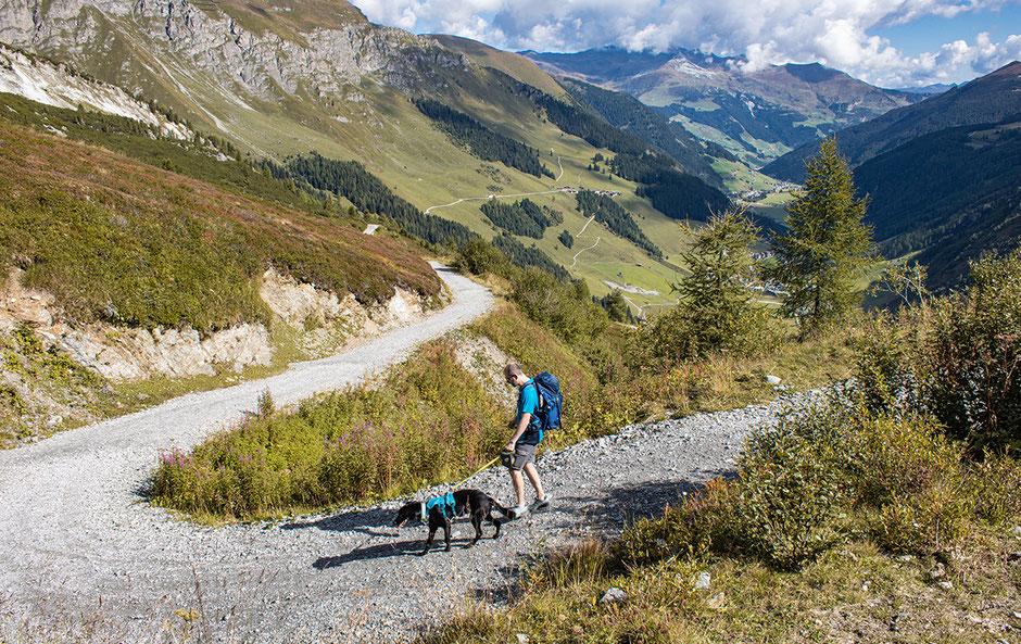 Wandern in Österreich, Wandern in Tirol, Wandern im Zillertal, Bichlalm, Hintertux, Hintertuxer Gletscher, Bergurlaub mit Hund