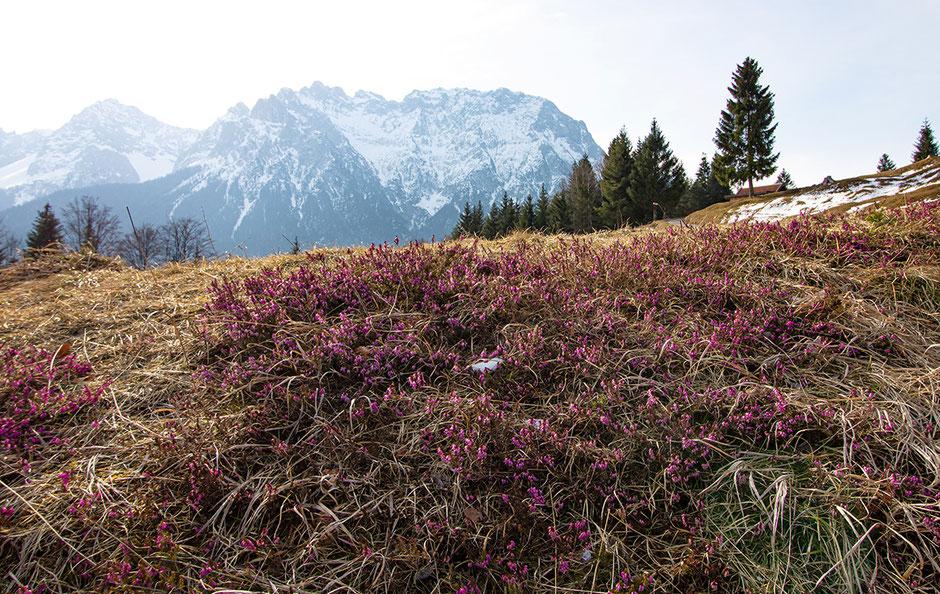 Blick auf das Karwendel vom Kranzberg