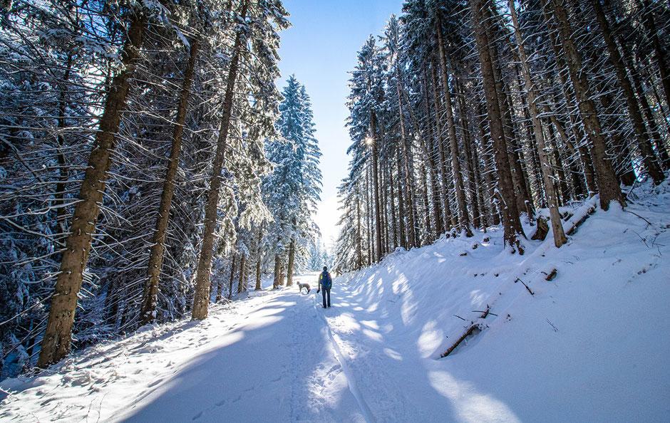 Aueralm Tegernsee Fockenstein Wandern in Bayern, Wandern mit Hund, Urlaub mit Hund, Bergurlaub mit Hund