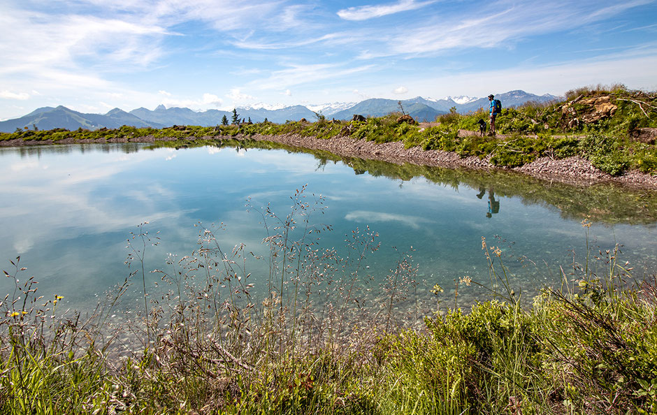 Kraftalm, Kleine Salve, Kitzbühler Alpen, Hotel in Tirol, Neueröffnung, Bergurlaub mit Hund, Urlaub in Tirol, Wandern mit Hund, Reisen mit Hund