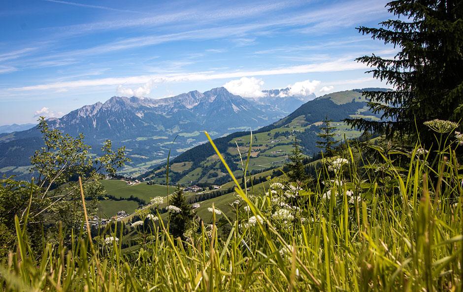 Kraftalm, Kleine Salve, Kitzbühler Alpen, Hotel in Tirol, Neueröffnung, Bergurlaub mit Hund, Urlaub in Tirol,Wandern mit Hund, Urlaub mit Hund, Reisen mit Hund, Bergurlaub mit Hund, Hohe Salve