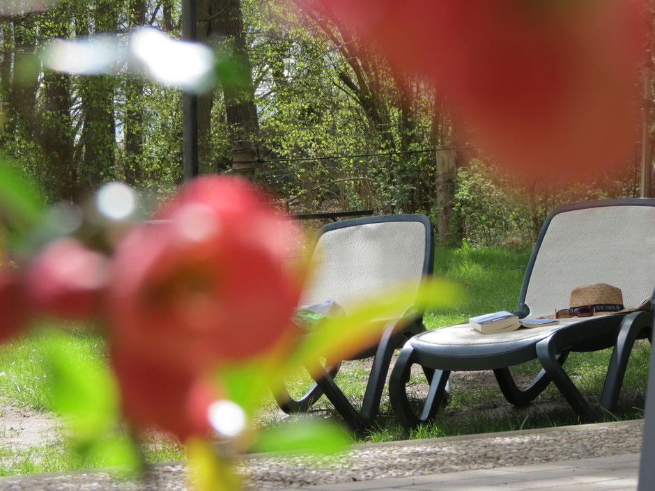 Urlaub Ferienhaus am See, am Wald, ruhige Alleinlage, Mecklenburg