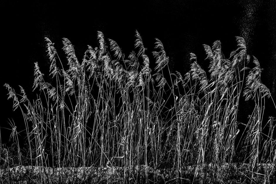 starnberger see - von florian paulus