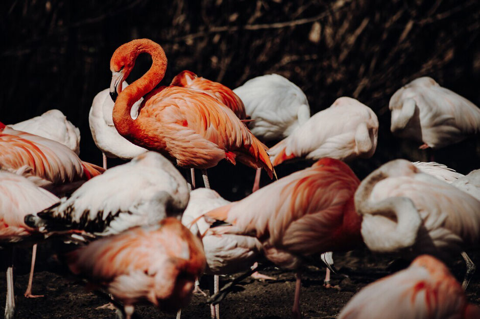 flamingo - fotokunst online kaufen