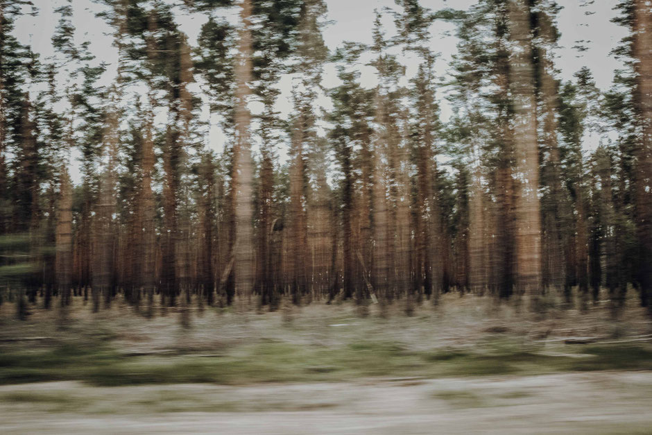 wald - naturfotografie von florian paulus