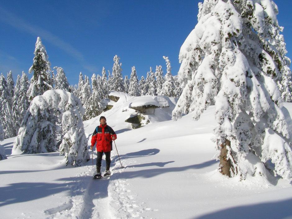 Schneeschuhwandern zum Plöckenstein