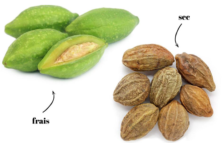 Chebula Terminalia - Haritaki fruit elixir de toute une vie, calmant sur l'esprit