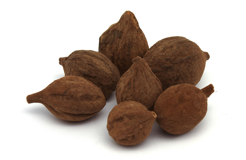 Terminalia bellirica - Bibhitaki fruit a des propriétés anticancérigènes, contient des antioxydants