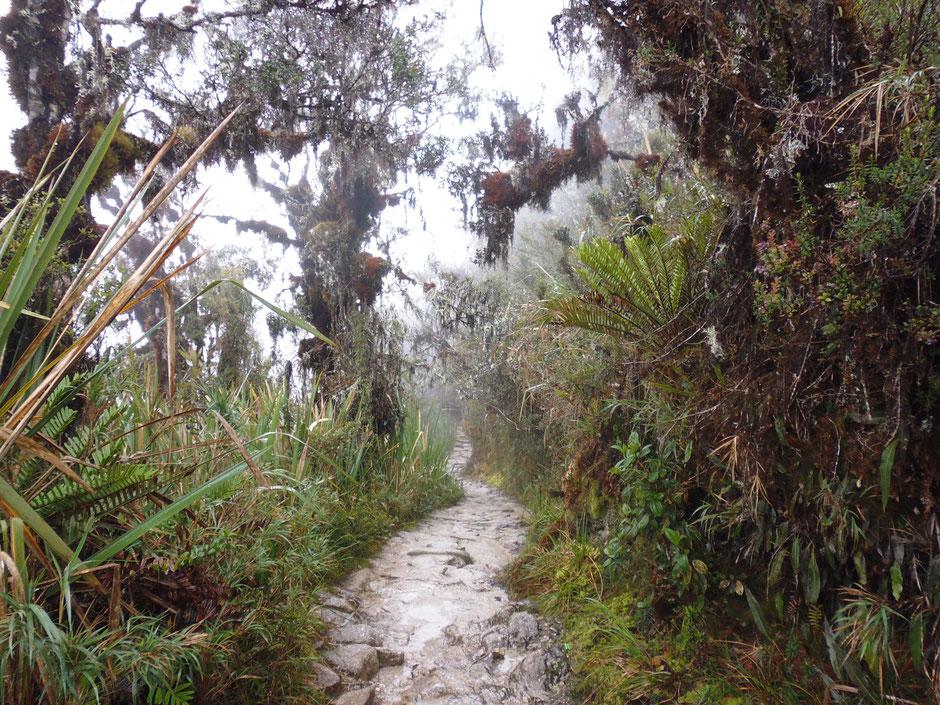 el sendero entre una tupida selva