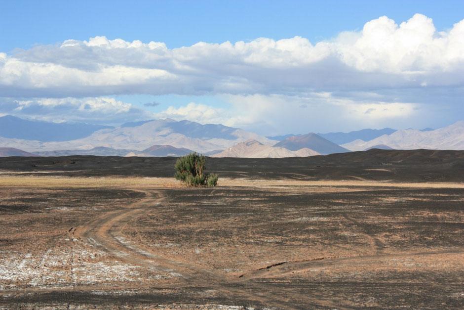 Arbol que sobrevive a tanta aridez