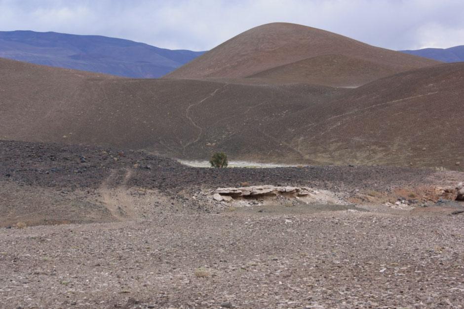 El árbol solitario desde lejos!