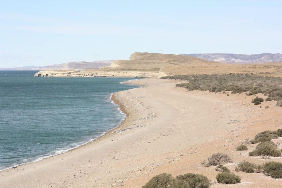 Desde el mirador una vista de la playa con miles de pingüinos