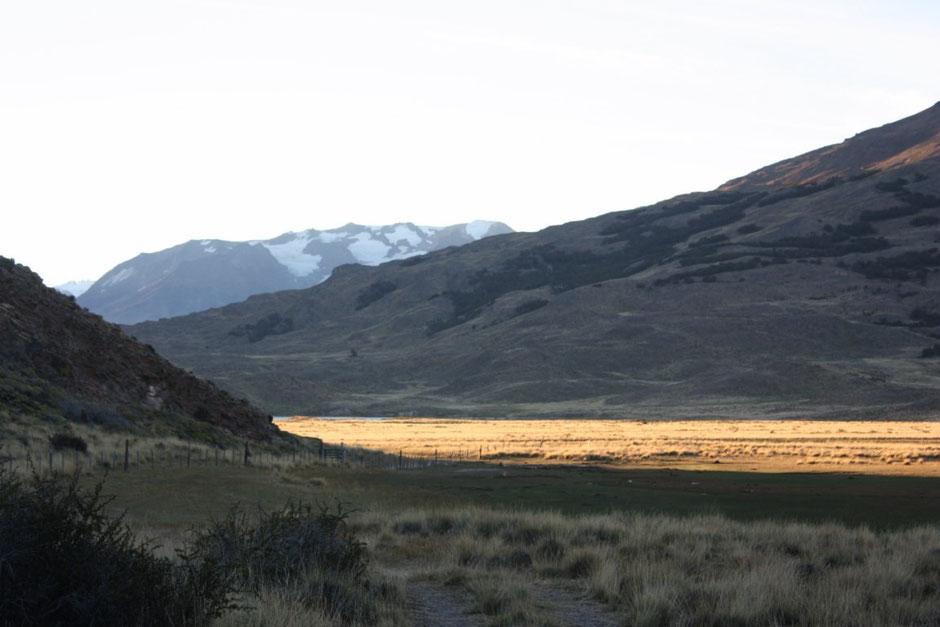 La estepa patagónica se tiñe de color oro
