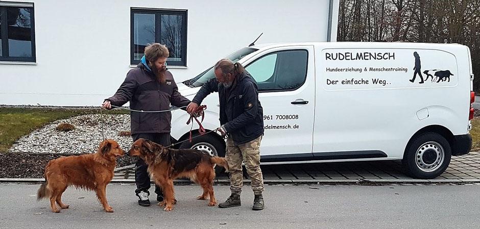 Training mit zwei Hunden Nase an Nase