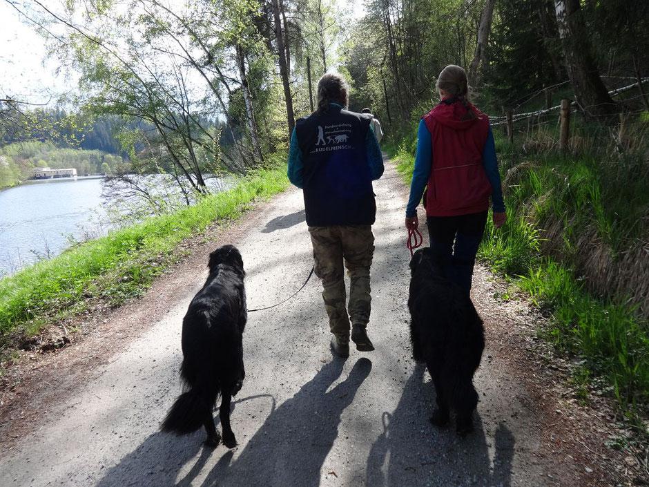 Hundetrainer mit Kunden Hovawart Hunde