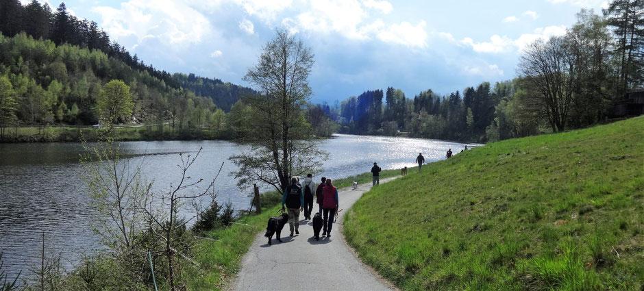 eine gruppe menschen mit hunden wandern am fluss