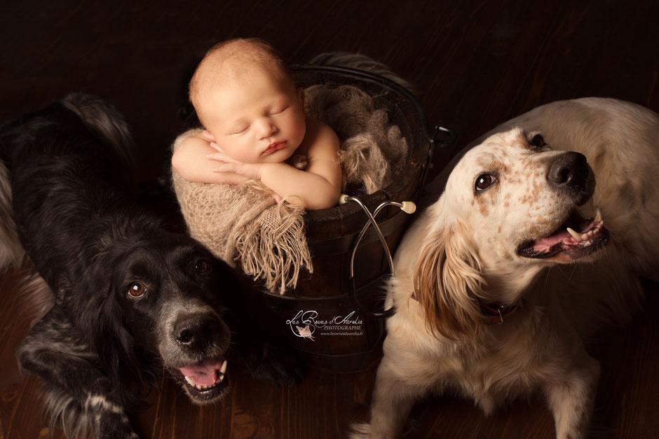 Photographe bébé animaux vétérinaire Brignoles