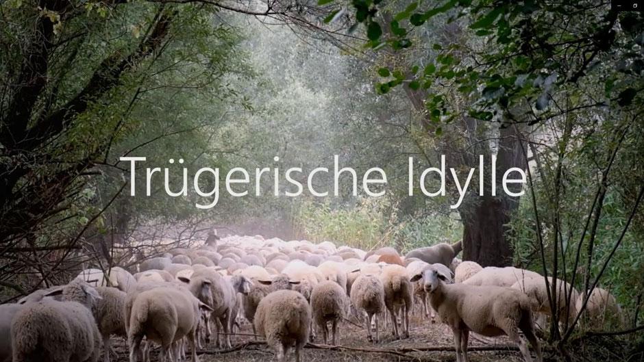 """Crime & Nature - Autorin Uli Aechtner visualisiert ihren Krimi """"Die Bach runter"""". Screenshot Uli Aechtner"""