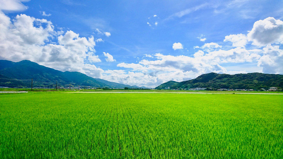 福岡県糸島市の田んぼ・田園 Rice fields, Rural cycling course / biking route in Itoshima, Fukuoka