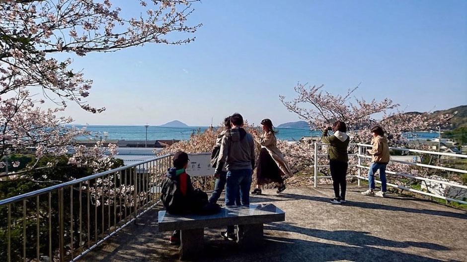 桜と海の眺め