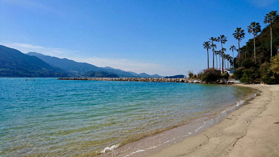 椰子並木の砂浜