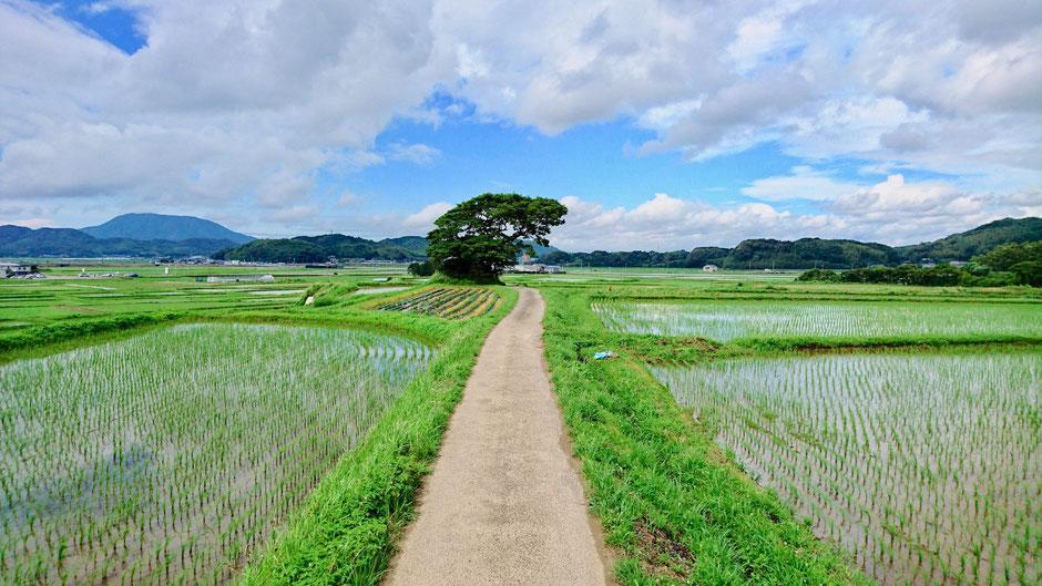 九州 福岡県糸島市のサイクリングコース、五久塚の里山 Rice fields, Rural cycling course / biking route in countryside,  Itoshima, Fukuoka, JAPAN