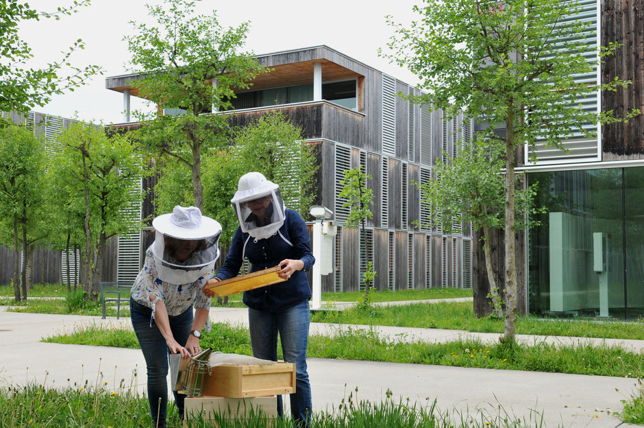 Die Stadtbienen Klagenfurt setzen sich für eine Verbesserung des Lebensraumes der Carnica Biene ein.