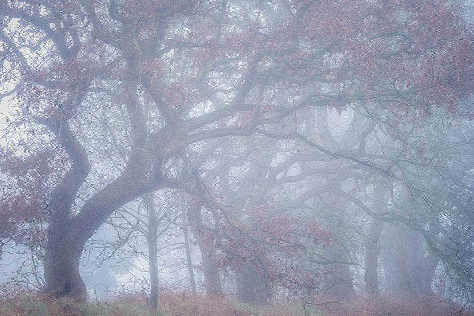 Bosrand in de Mist - Vries © Jurjen Veerman