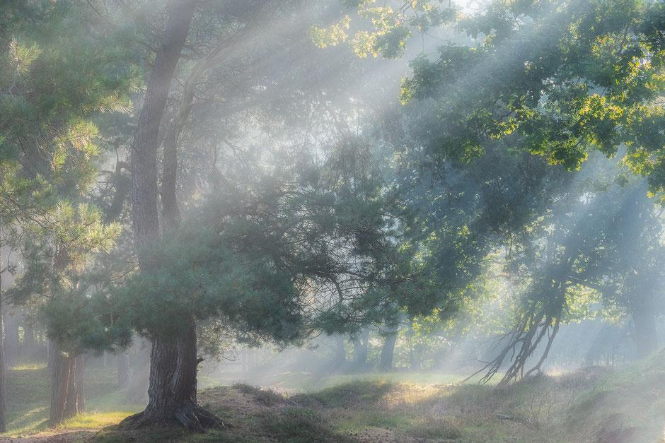 Zonneharpen in de mist