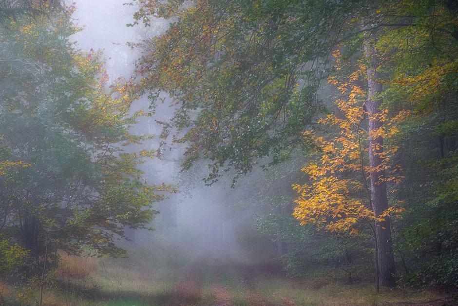 Herfstochtend boswachterij Borger - Gieten © Jurjen Veerman
