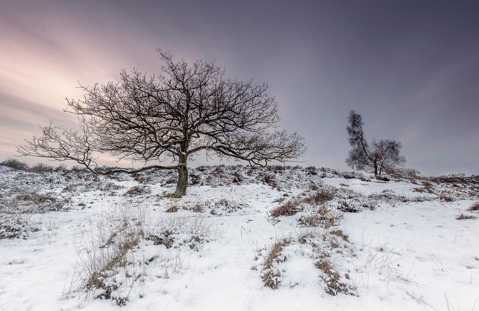Winterlandschap Gasterse Duinen Oudemolen © Jurjen Veerman