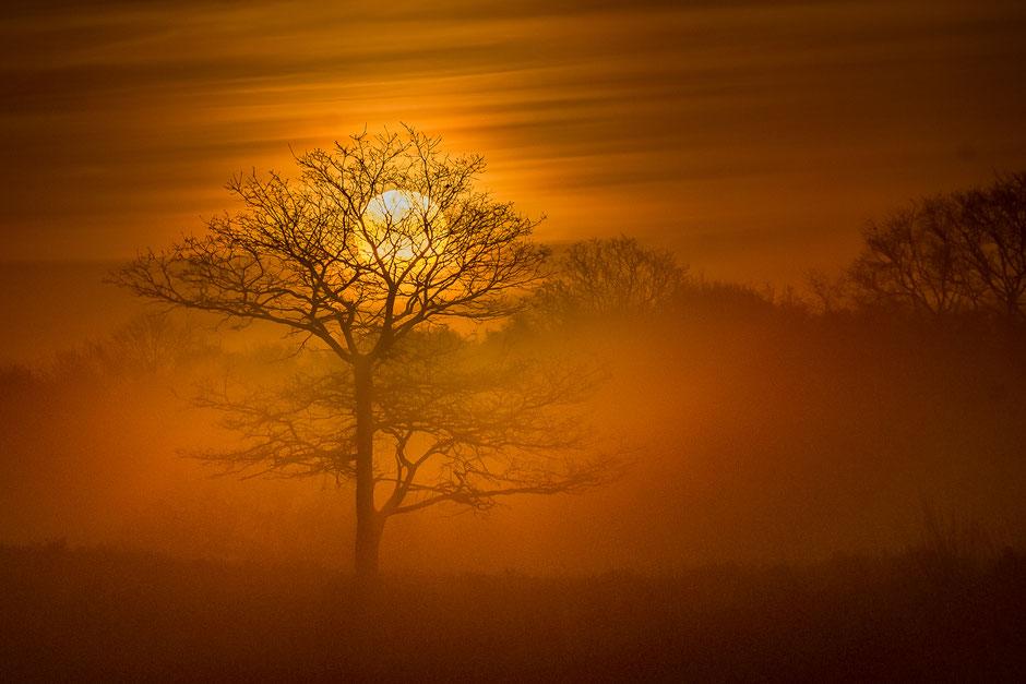 Sunrise Gasterse Duinen