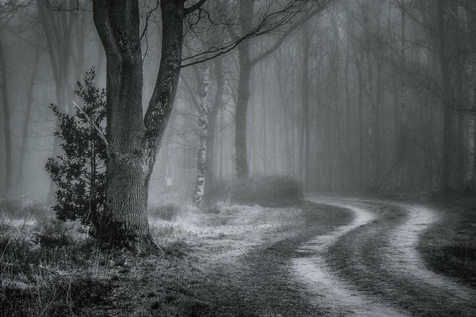 Zwart wit opname bospad Oudemolen - Stroomdal Drentse Aa