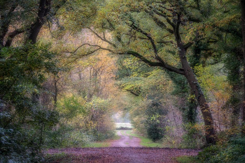 Herfstlaantje in Vries - Tynaarlo © Jurjen Veerman