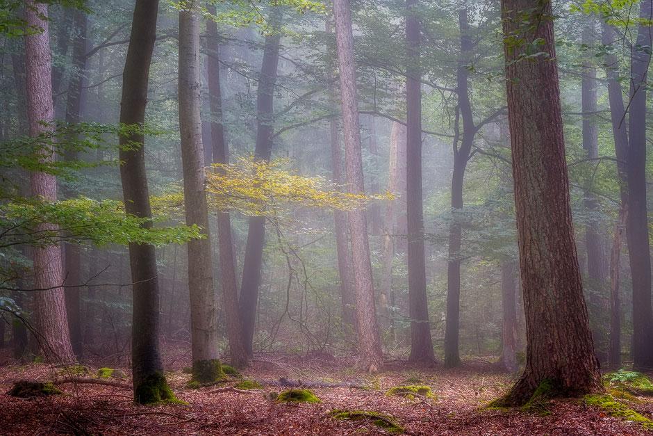 Herfstkleuren in de bossen van Drenthe