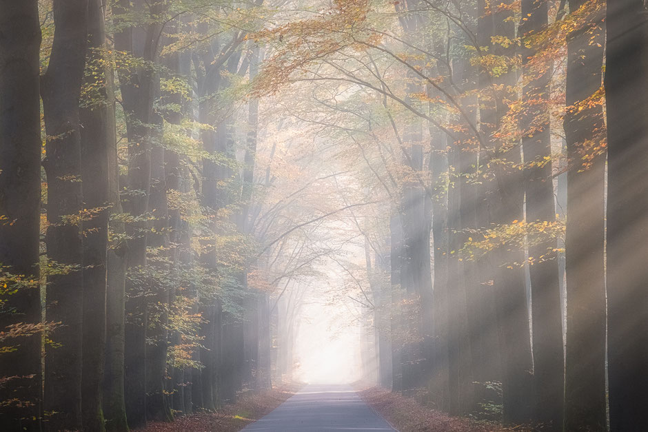 Zonneharpen boswachterij Gieten - Borger © Jurjen Veerman