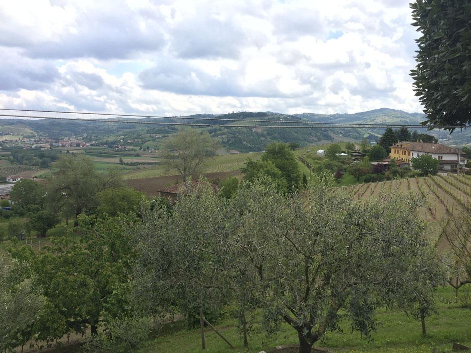 Barbera d'astiと Moscato d´Asti のFranco mondoからの眺め葡萄畑