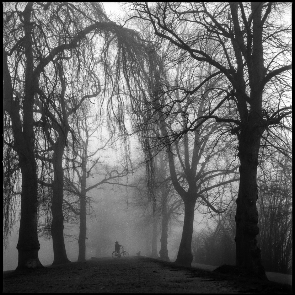 Foggy view of a mystic path way along with trees and a biker in the center.